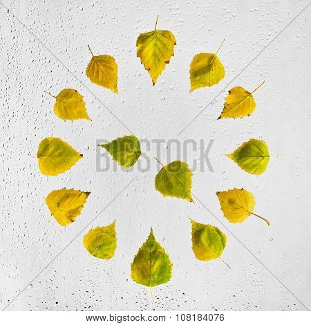 Clock stacked with colorful autumn birch leaves on the wet glass.