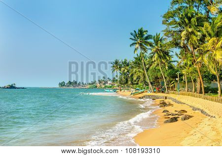 Exotic Caribbean beach full of palm trees