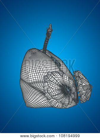 Concept or conceptual anatomical human woman 3D wireframe mesh respiratory system  with lungs and breasts on blue background