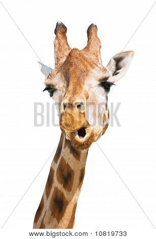 Giraffe Head Astounded Look