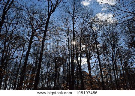 leafless autumn trees against a blue sky