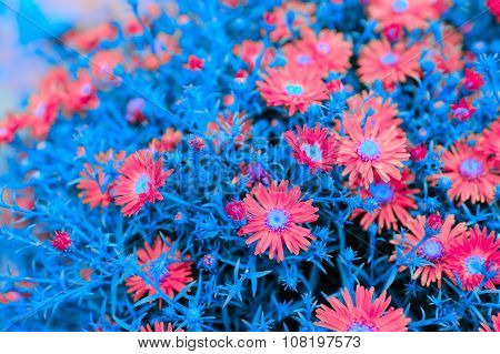 Creative New York Aster Flowers With Blue Leaves