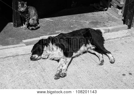 Portrait of street dog and cat in a district of the protected UNESCO World Heritage Site of Valparaiso, Chile