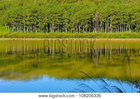 Dalat, Suoi Vang, Travel, Pine Tree, Ecotourism