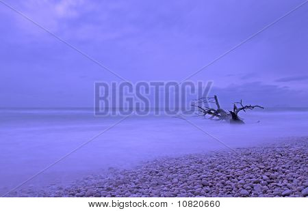 Tree In The Sea, Beach