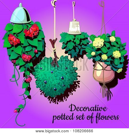 Set of suspended ornamental plants flowers