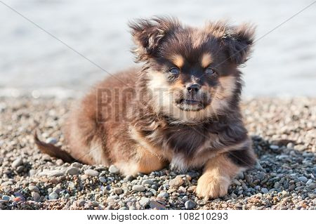 Pretty Puppy On The Beach