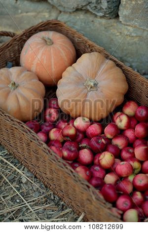 red apples and pumpkin