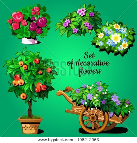 Home set of decorative flowering plants
