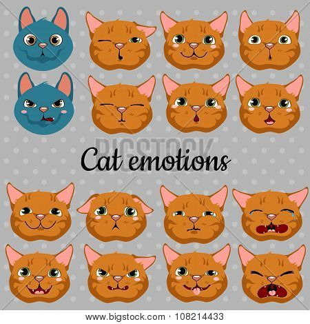 Set of faces of cats on a gray background
