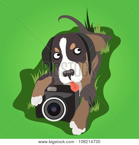 Lop-eared dog with a camera on the grass