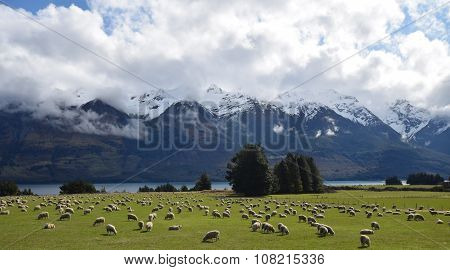 Sheep grazing along mountain river
