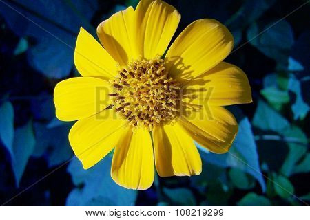 Yellow intense