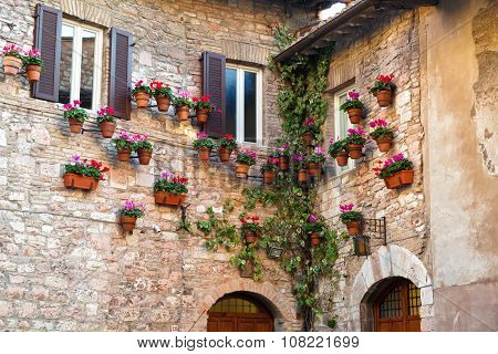 Many Flower Pots With Blooming Cyclamen On The Wall Of An Old Stone House In Assisi, Umbria