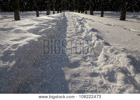 Snow covered road lined with trees at night