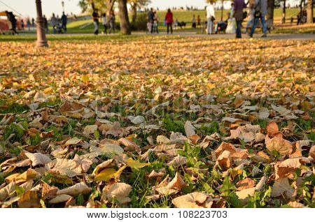 Autumn Leaves And Walkers
