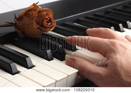 Hand Playing The Piano Lying On It With Dried Rose
