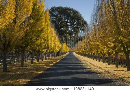 Fall Drive Through Napa