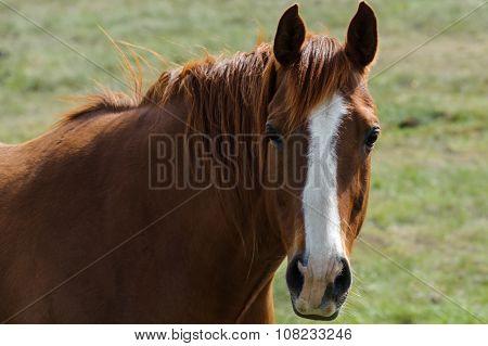 Mustang Horse Portrait