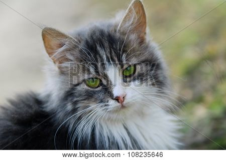 Portrait of a young furry cat