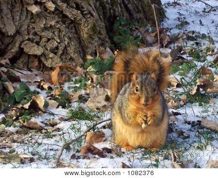 Squirrel Talk