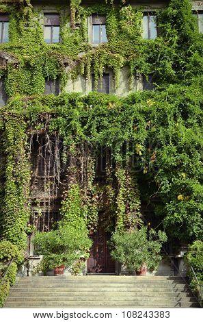 Ivy Facade