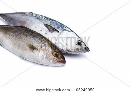 Raw fish, Bonito and Yellowtail, isolated on white