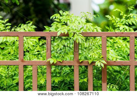 Iron Fence And A Green Leaf