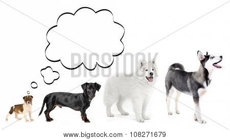 Dogs with empty cloud bubble above  head, isolated on white