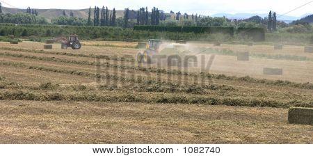 Harvesting Pea Vine Hay