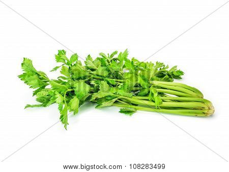 Fresh green celery isolated on white background.