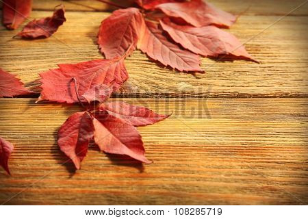 Red autumn leaves on wooden table, close-up