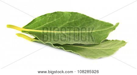Fresh bay leaves, isolated on white