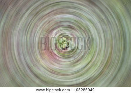 Abstract Radial Blur Background From Green Leaves