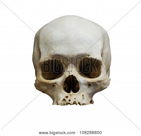 The Skull Of Human On White Background