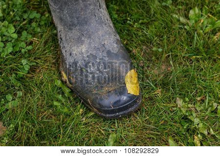 Rubber Shoe With Leave On It In Grass Field