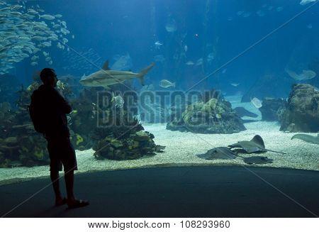 A Person Looking At The Lisbon Aquarium Main Tank