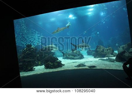 Lisbon Aquarium Main Tank