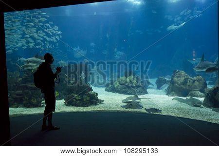 A Person Looking At The Lisbon Aquarium
