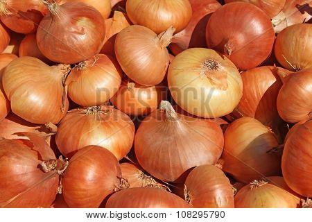 Big Pile Of Onions