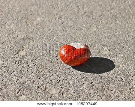 Chestnut Fruit On The Asphalt