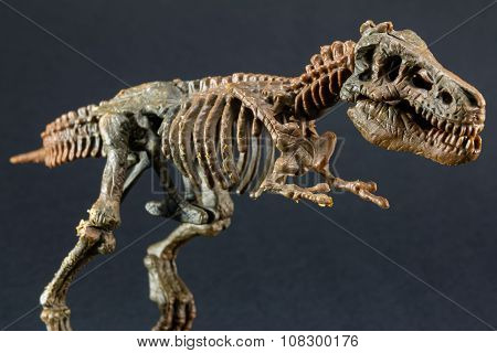 Dinosaur Tyrannosaurus T Rex Skeleton On Black Background