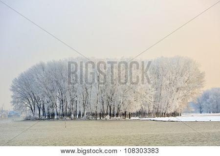 Frosty Winter Tree