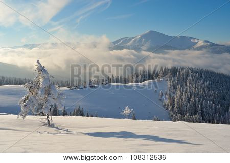 Winter landscape. Sunny day in the mountains. Snowy mountain village. Carpathians, Ukraine, Europe