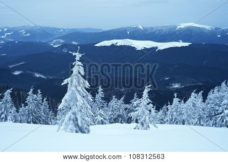 Snow in the mountains. Winter landscape with fir trees. Cloudy night