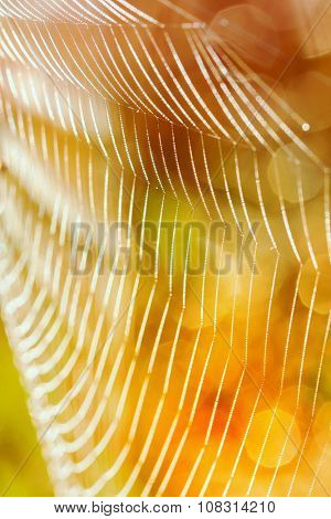 After the rain, the hidden beauty of this cobweb