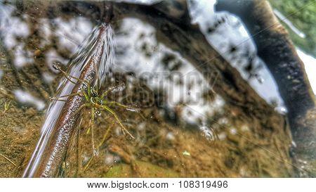 Aquatica Spider