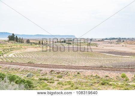 Farm Scene Near Vredendal