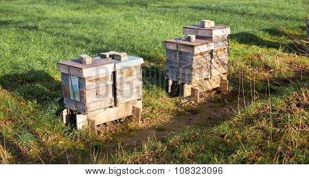 Beehives At A Field