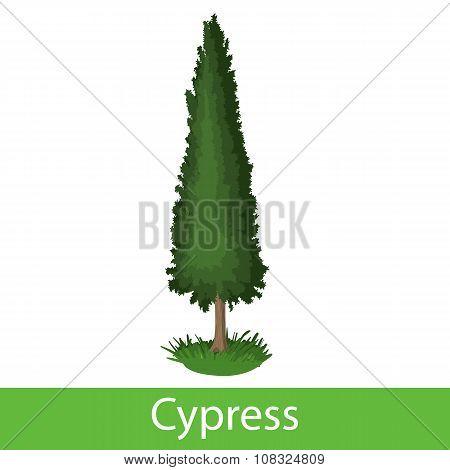 Cypress cartoon icon